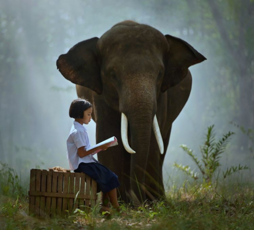 Little girl and her elephant