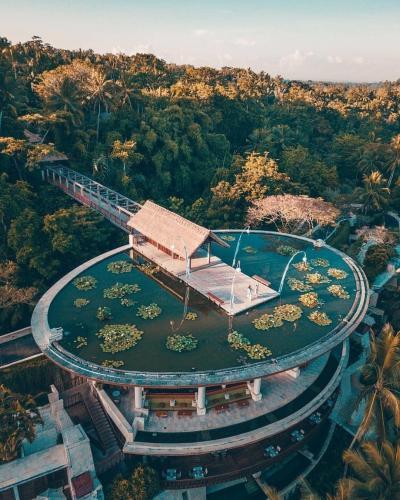 Rooftop Lotus Pond