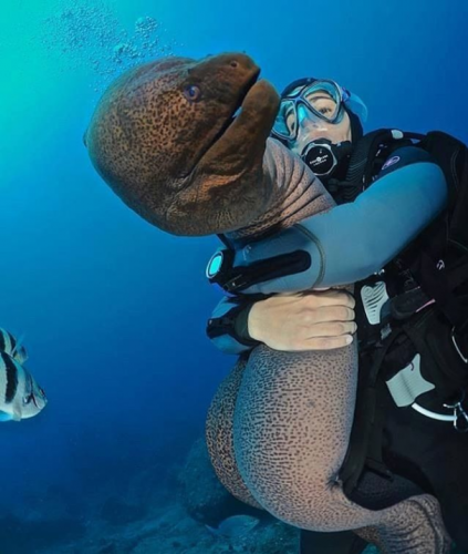 Scuba diver hugging an Eel